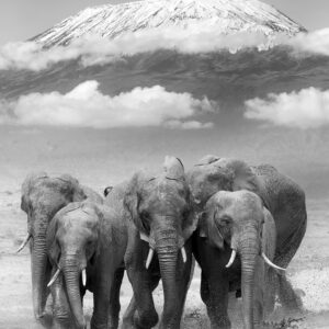 Group Elephants