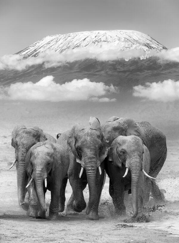Group Elephants