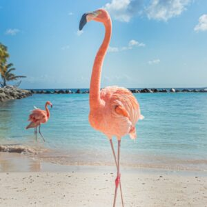 Two Flamingo's