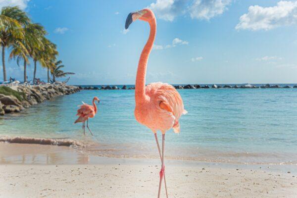 Two Flamingo's
