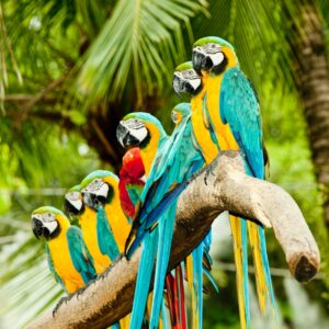 Macaw Group