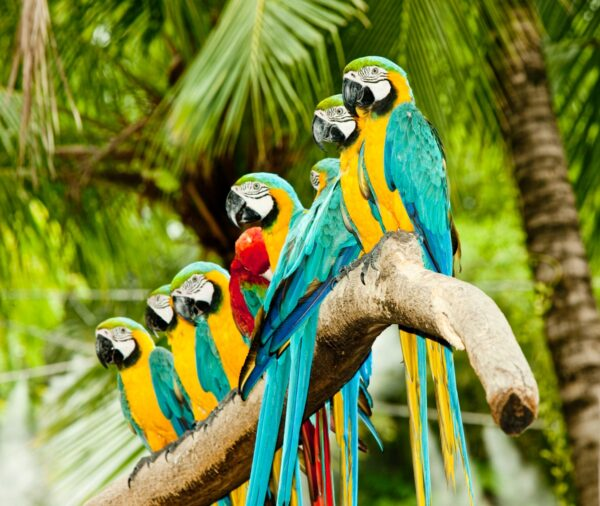 Macaw Group
