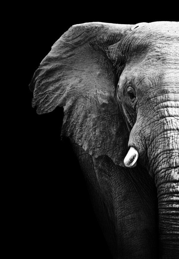 Half Elephant