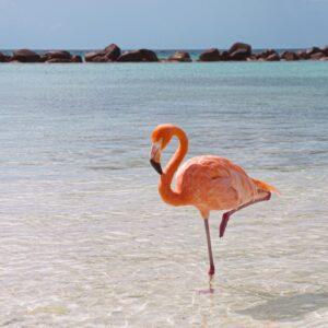 Blue Sea Flamingo